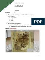 Practical Pathology 6