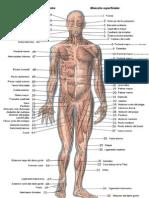 Anatomia Aristos