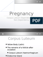 Corpus Luteum and Pregnancy