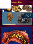 Acute and Chronic Cholecystitis