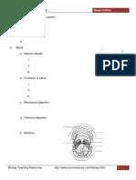 Digestive System Notes Outline