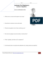 Anatomy for Beginners - Digestion Worksheet