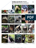 Imagenes de Identificacion - Animales