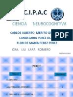 El Cerebro Introduccion a La Neurociencia Cognitiva Cap 2