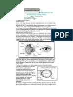 Prevenção de acidentes oculares
