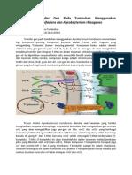 Mekanisme Transfer Gen Agrobacterium Tumifaciens