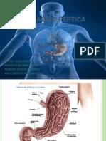 Enfermedad Acido Peptica Definitiva