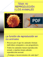 16 Reproduccion Animales