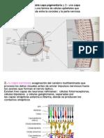 fisiologia.RETINA.pdf