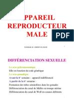 Appareil Reproducteur Male