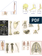 Anatomia (Ossa)