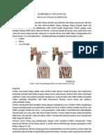 Komplikasi Osteoporosis