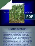 CULTIVO Y PROCESAMINETO DE LA CAÑA DE