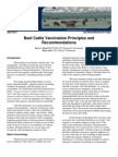 Beef Cattle Vax Protocol2