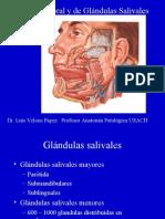 08-Patología Digestiva-Cabeza y Cuello