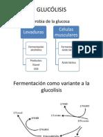Ciclos Pentosa, Glucolisis, Lipidos