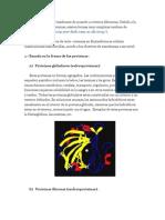 Las Proteinas Pueden Clasificarse de Acuerdo a Criterios Diferentes