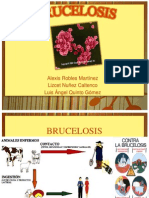 Brucelosis Expo Quinto