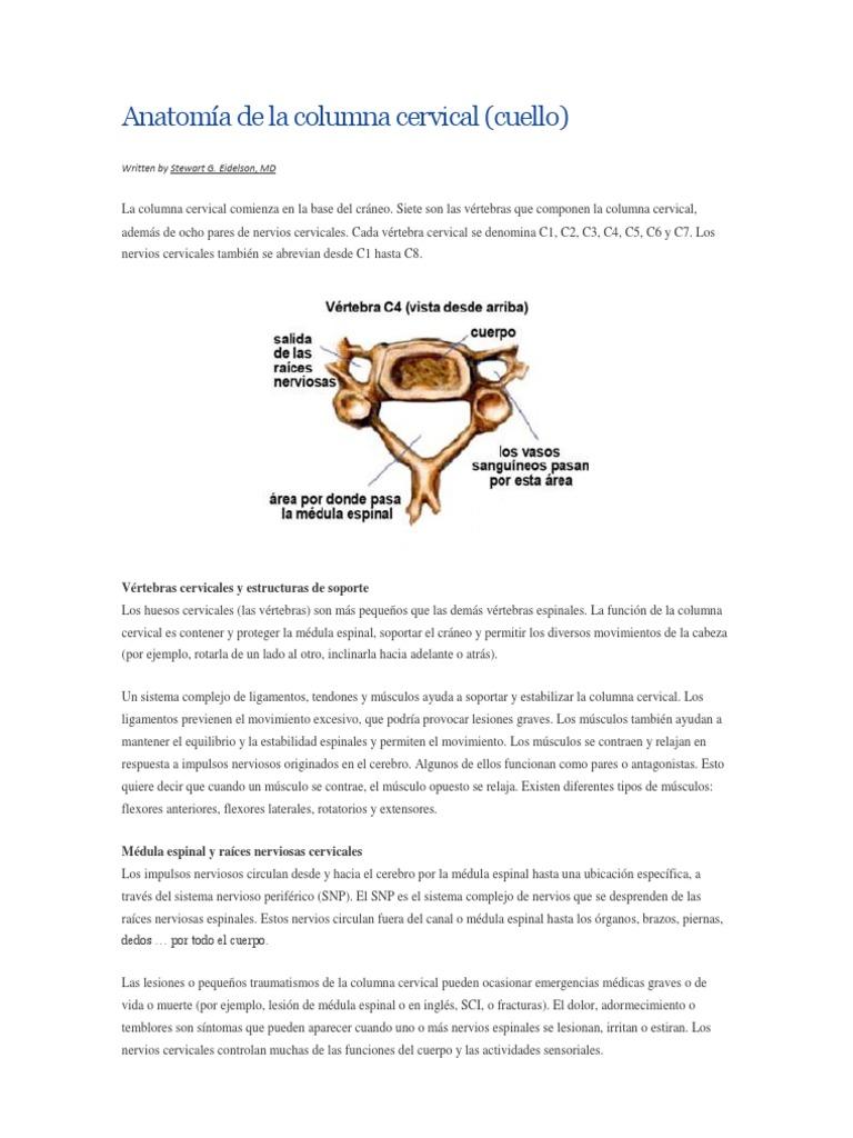 Anatomía de la columna cervical SCFA