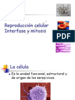 interfase mitosis y cancer2013.pdf