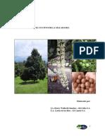 El Cultivo de La Macadamia