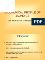 Jaundice Biochemical Profile