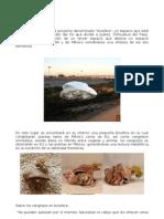 Proyecto biosfera (UNAM)