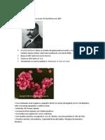 GENERO BRUCELLA.docx