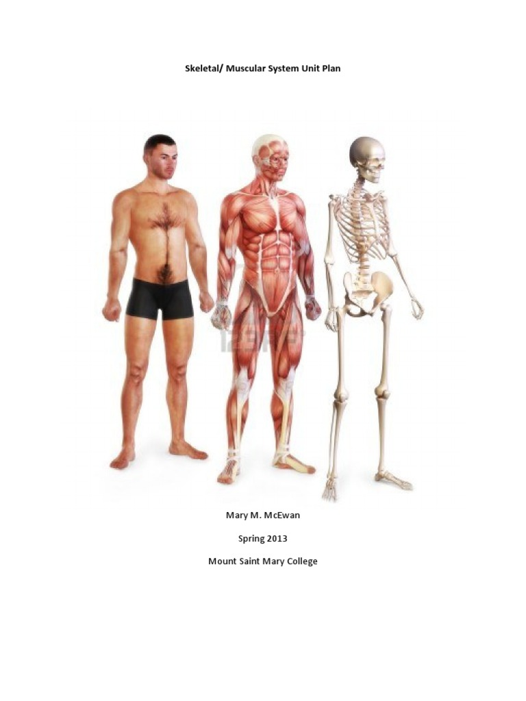 Skeletal Muscular System Unit Plan Muscle Scoliosis