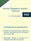Eje Snc Hipotalamo Hipofiso Testicular