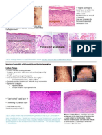 Pages From Pathology Week 5 p15-28