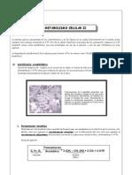 BIOLOGÍA - Guía 6 - Metabolismo Celular II