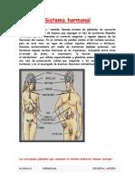 Sistema Hormonal