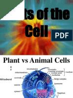 Cell Parts-school Metaphor