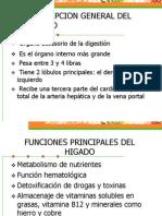 Descripcion General Del Higado