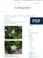 We Love Our Bangladesh_ Jasmine_Arabian Jasmine Flower (Beli Ful) - Strong Scented Flower in Bangladesh