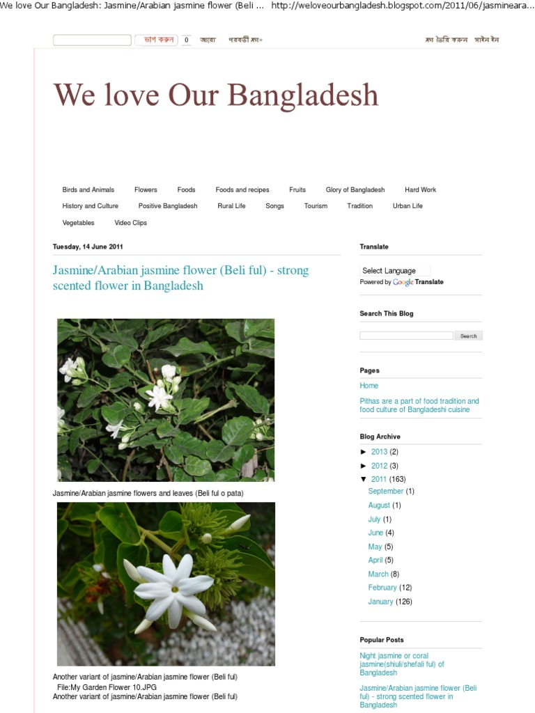 We love our bangladesh jasminearabian jasmine flower beli ful we love our bangladesh jasminearabian jasmine flower beli ful strong scented flower in bangladesh ethnobotany plants izmirmasajfo