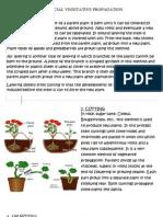 Artificial Vegetative Propagation