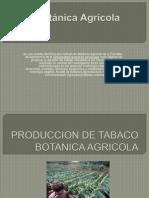 Botánica AgrícolaPOINT