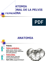 Eco Anatomia Pelvica