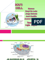 animal cell.pptx