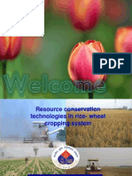 Resource conservation techniques  in rice wheat cropping system