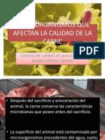 Microorganismos Que Afectan La Calidad de La Carne
