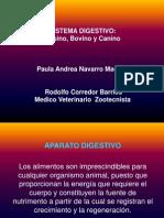 Digestivo Paula