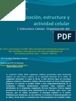 Clase N°3 PSU De Biología 2009 - Organizacion Del Citoplasma