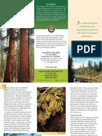 Calaveras Big Trees State Brochure