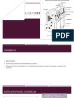 Histologia Del Cerebelo