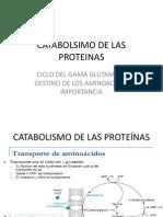 Catabolsimo de Las Proteinas