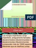 expposicion hongos (1)