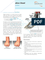 Foot Tendon Tibialis Posterior Dysfunction